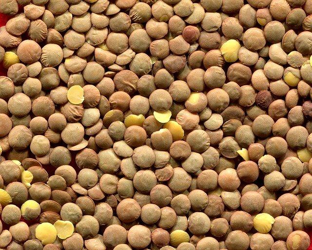 semena čočky